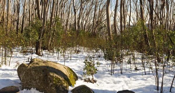 aUSTRALIAN SNOWFIELDS